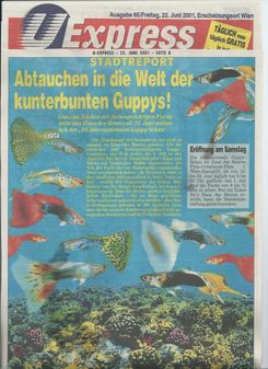 40. internationale Guppy-Schau