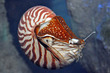 Bild nautilus-guentherhulla_project_news_bildkleinlinks_236.jpg